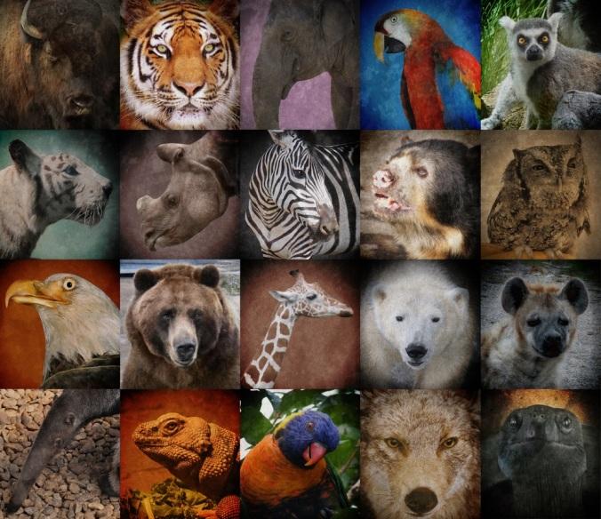 endangered-animals-group